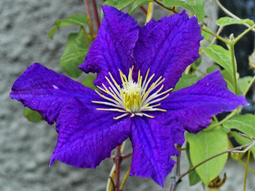 из серии цветы - valeriy g_g