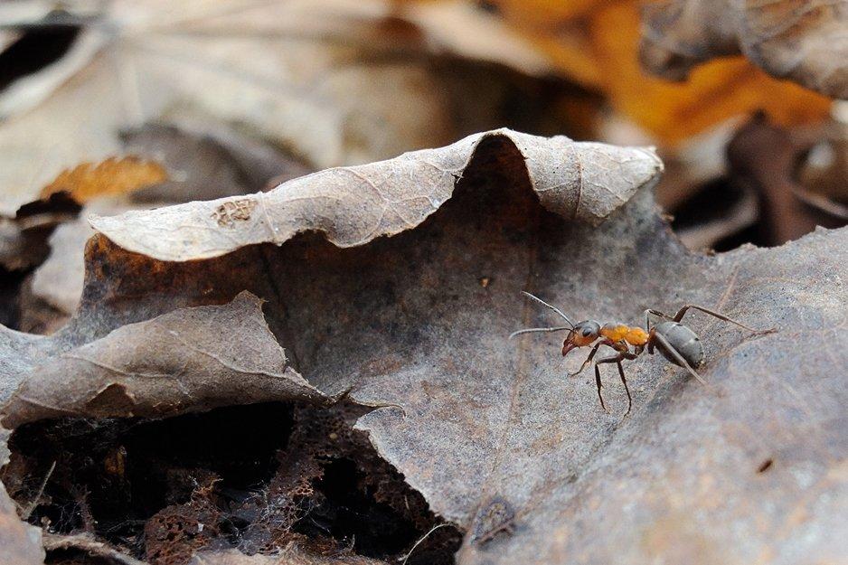 В поисках стрекозы - Pavel Stolyar