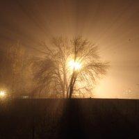 0251 :: Коля Волошин