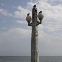 На набережной Сухума :: Роман Ксендзов