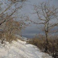 перед снегом :: Андрей ЕВСЕЕВ