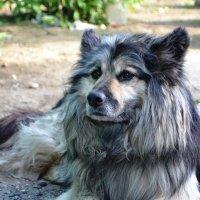 Пёс :: Ольга Демченкова