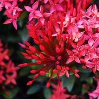 цветы :: Alex