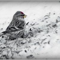 Попировал! :: Владимир Шошин