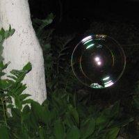 Мыльный пузырь. :: Виктория Чурилова