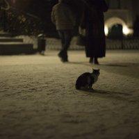 Одиночество... :: Елена Васильева