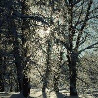 Скоро Весна! :: Александр Петров