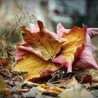 осень :: Алёна Кабаева