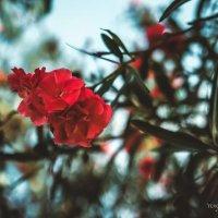 тунисский цветочек :: Вероника Галтыхина