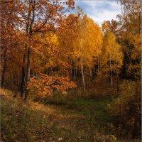 В осеннем лесу. :: Юрий