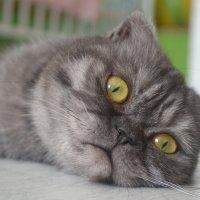 Кошечка :: Наталья Мулица
