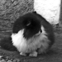 кошка :: Юлия Закопайло