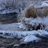 Зимний ручей :: Алексей Golovchenko