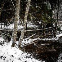 ... прогулка по первому снегу... :: Dmitri_Krzhechkovski Кржечковски