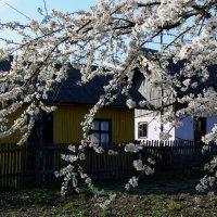 просто весна :: Богдан Вовк