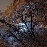 и деревья,словно из стекла... :: Галина R...