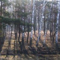 В лесу :: Алина Тазова