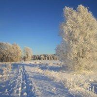 волшебство декабря :: liudmila drake