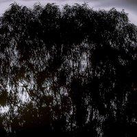 Дерево на закате :: Shmual Hava Retro