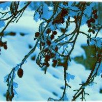 зима в разгаре :: Marina Timoveewa