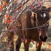 Осень...вечер...грустная лошадка  )) :: Александр Лесик