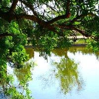 Пруд в парке Роз. :: Алла Шапошникова