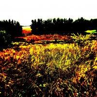 яркое лето :: Ксения ...