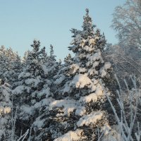 Снежное утро. Декабрь (см.ком) :: Юрий Цыплятников