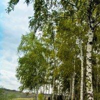 У леса, на опушке ... :: Анатолий Островский