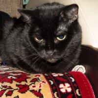 моя кошка :: jenia77 Миронюк Женя