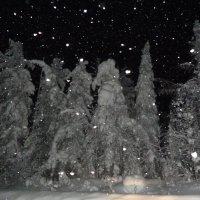 лесные великаны :: Лариса Б