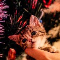 Первый в жизни новый год))) :: Кристина Пашкова