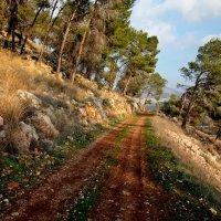 прогулка по лесу :: evgeni vaizer