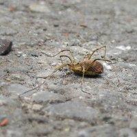 Дружелюбный сосед - нечеловек паук. :: Борис Ряплов