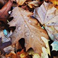 осенние листья :: Ира Днепровская