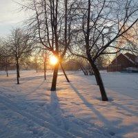 зимнее солнце :: Елена