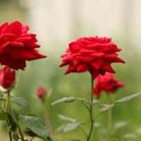 цветы :: Slava