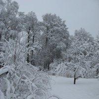 В саду после снегопада :: Alena Cyargeenka
