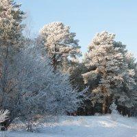 Зима :: Олег Ганжа