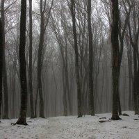 Туманный зимний лес :: Михаил Баевский