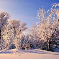 Иней на деревьях словно пух... :: Евгений Юрков