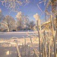 мороз и солнце... :: liudmila drake