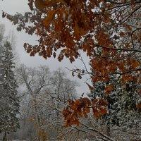 Первый снег :: Юрий Цыплятников