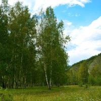 Лужайка у реки :: юрий Амосов