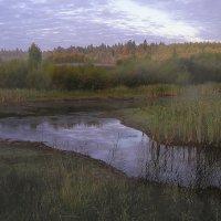 Утро на болоте. :: Валерий Молоток