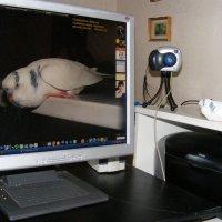 Проверяет качество обоев на экране :: Александр Скамо
