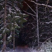 Лес,зима,дорога,ночь... :: Виталий Дарханов