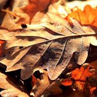 Осенний лист :: Ирина