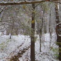 Wintermolbert :: Gintaras Aleksandravicius