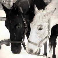 Черное и белое :: Юлия Иванова (Константинова)